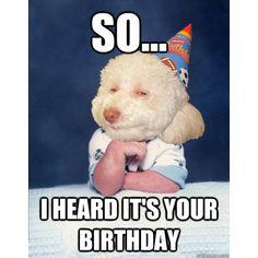Happy Birthday Woman, Happy Birthday Girl Funny, Birthday Meme Dog, Happy Brithday, Singing Happy Birthday, Yellow Octopus, Emoji Tbh, Birthdays, Birthday Messages