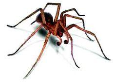 Kết quả hình ảnh cho spider