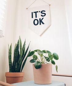 Pilea? It's ok!