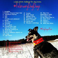 Attention all dog lovers. Here is the February Dog Days Photo Challenge.  #dogdaysoffun #februarydogdays #instagram #photochallenge