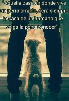 Aquella casa en donde vive un perro amado, será siempre la casa de un humano que valga la pena conocer ... #foto #fotos #frase #frases #perro #perros #animales #animal #mascota #mascotas
