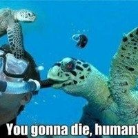 30 Funny animal captions - part 13 pics), animal pictures with captions, funny memes Funny Cute, Funny Memes, Jokes, Funny Stuff, Videos Funny, Funny Captions, Funny Animal Pictures, Funny Photos, Diving