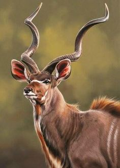 Wild Animals Pictures, Deer Pictures, Animal Pictures, Rare Animals, Jungle Animals, Animals And Pets, Animal Paintings, Animal Drawings, Impala Animal