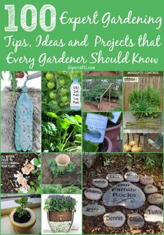 100 Expert Gardening Tips, Ideas and Projects that Every Gardener Should Know. Spectacularly impressive gardening projects and hacks!
