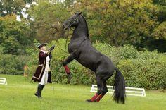 #Black #Kladruber #Horse