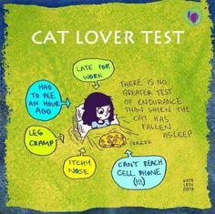 Cat Lover Test, nos ha pasado a todos los que tenemos gatos, a veces hay que hacer un ejercicio de voluntad para movernos cuando están tan mooooonos