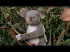 Career Builder Super Bowl ad. This spot is so spot on. I wish I'd done this. Punching a koala once would be good enough but punching it several times is genius.