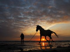 View 10 Best horses running on the beach at sunset images Underground World, Weather Underground, Sunset Images, Silhouette Photography, Running On The Beach, Into The West, Cowboy Horse, Horse Silhouette, Running Horses