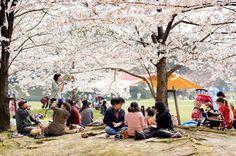 Photos of the Hanami in Fukuoka