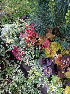 三角花壇。ヒューケラとユーフォルビアがはばをきかせています。2015.5.10