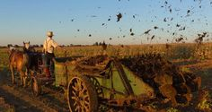 Off-The-Grid Secrets Of The Amish