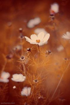 Garden photography tips & challenges Beautiful Flowers, Beautiful Pictures, Bokeh Photography, Caramel Color, Creme Caramel, Milk And Honey, Summer Garden, Photo Tips, Belle Photo