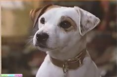 Wishbone... Marley's brotha from anotha motha... With way more brains