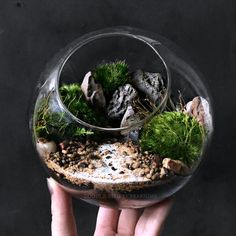 This glass orb terrarium is planted with fresh live mosses, petrified wood, and river stones. Perfectly suited for desktop decor, the flat bottom