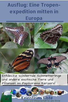 Insects, Kindergarten, Travel, Animals, Exotic Animals, Natural Wonders, Road Trip Destinations, Switzerland, Round Round