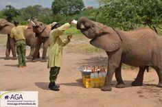 Die noch Milch abhängigen Elefanten bekommen drei Mal am Tag zwei Flaschen Milch. Nairobi, Elephant, Animals, 3 Year Olds, Elephants, National Forest, Milk, Flasks, Animales