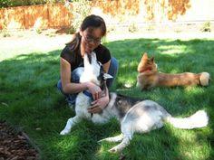 Girl hugging Husky dog. Husky dog licking/kissing girl on chin and doing chin nibbles.