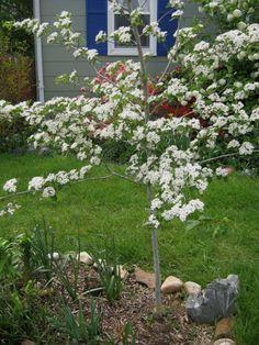 Los árboles cumplen un papel muy importante en la salud del planeta. Pero además son imprescindibles en un jardín para darnos la altura y verticalidad que precisamos. Sólo porque tu jardín o patio …