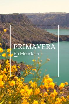 #PRIMAVERA #MENDOZA # PAISAJE #FLORES #SANRAFAEL San Rafael, Mendoza, Tours, Scenery, Adventure, Argentina, Spring, Places, Flowers