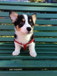 Take a seat, preferably on a park bench. | Don't Be Sad, Look At These Corgi Puppies