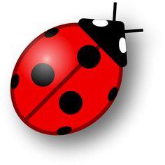 Ladybug ❤ liked on Polyvore featuring animals