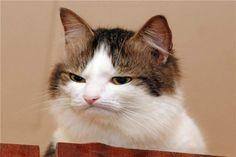 skeptical cat - Google Search