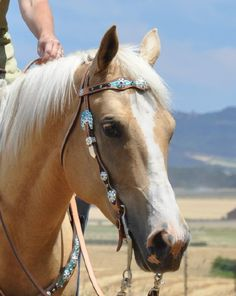Jozee Girl Crystal Tack, Jewelry and Accessories, Crystal Stirrups and More ~ Crystal Horse Tack, Headstalls, Bling Bridles, Reins, Breastcollars, Nosebands
