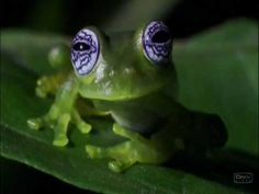 Bizarre Animal & Nature Scenes from Discovery Channel's Planet Earth