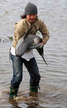 Porpoise being rescued out of a flooded rice field after it was swept by the tsunami and earthquake in Sendai, Japan.   Also, the chain on the man's pants makes the porpoise look like a narwhal at first glance :)