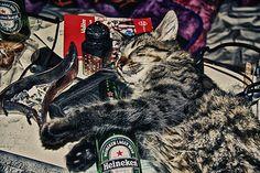 IMG_2985--3 | Flickr - Photo Sharing!