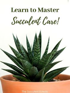 Learn everything you need to know to grow healthy, happy succulents! Discover clear, accessible articles on how to water succulents, the best succulent soil, how much sunshine succulents need, protecting succulents from pests and so much more! You can do this! #succulentcare #howtowatersucculents #succulentcareinstructions #succulentcareguide How To Water Succulents, Succulent Soil, Planting Succulents, You Can Do, Need To Know, Have Fun, How To Remove, Messages, Canning