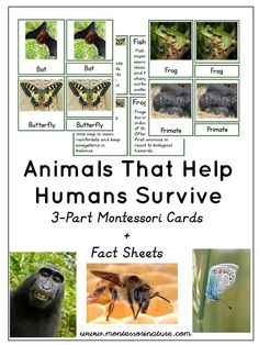 Animals That Help Humans Survive - Earth Day Activity - Montessori Cards   Montessori Inspired Printables   Preschool Educational Printables