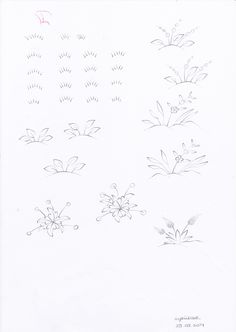 Plants and flowers 2