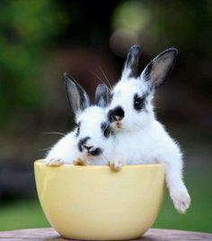 Bunnies (: