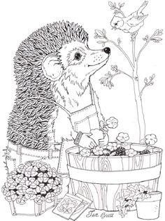 On Noah S Ark Springboks Coloring Jan Brett Pinterest
