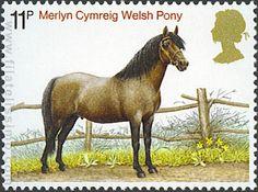 Caballos de Raza: Welsh Pony.