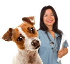 Dog UTI Home treatment