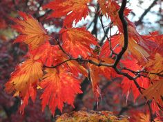 Fall isn't usually the first season you think of for mulching, but it's just as good as any other season.as long as you know what you're doing. ~Deb & Sandra CincyListings RE/MAX Preferred Group Maryland Real Estate, Diy Network, Autumn Garden, Green Trees, Fall Season, Rocky Mountains, Backyard, Seasons, This Or That Questions