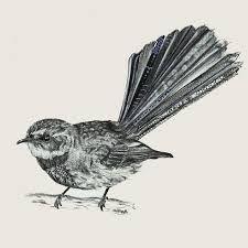 bellbird linear drawing - Google Search