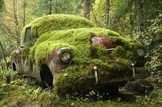 """Copy Cats: """"To my right, the carcass of an old car sat moldering in the trees..."""" Photo by John Cannel"""