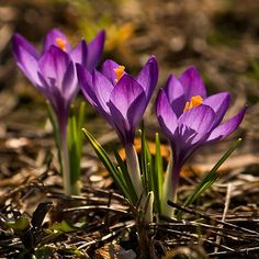 When I gave my life to Christ, crocus sprouted beneath my dumpster. Wow thats profound KCM