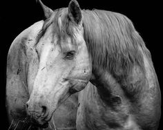 battle-worn, deserving of respect.  print available.  portion of proceeds to www.returntofreedom.org