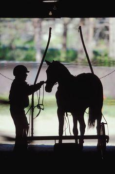 Vamos ser sincero. - #ser #sincero #Vamos Trotter, Standardbred Horse, Racing Quotes, Triple Crown Winners, Horse Racing, Race Horses, Harness Racing, Photography Classes, Horse Photos