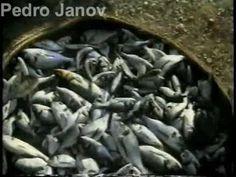 Globo Repórter: pesca esportiva, parte 1 - 10/01/1998