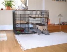 Image result for convert a dog kennel into a rabbit hutch
