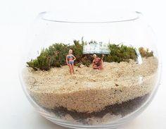 Music on the beach. Beach terrarium live moss. Terrarium