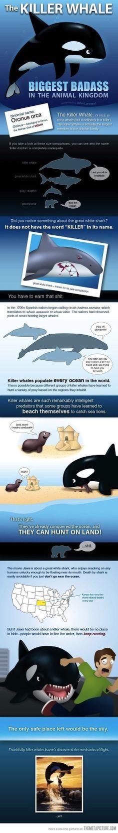 The Killer Whale hahahahahaha