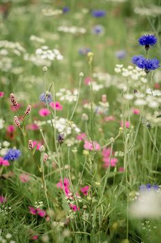 Wild Flower Photograph Print // Field of Flowers Photography // Colourful Floral Photo Wall Art // Wild Flowers, Beautiful Flowers, Meadow Flowers, Field Of Flowers, Beautiful Beautiful, Exotic Flowers, Fresh Flowers, Purple Flowers, Art Floral Japonais