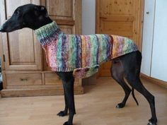 Cats With Brain Freeze Knitting Patterns For Dogs, Crochet Dog Sweater Free Pattern, Dog Coat Pattern, Knit Dog Sweater, Large Dog Sweaters, Pet Sweaters, Italian Greyhound Clothes, Crochet Dog Clothes, Teacup Cats