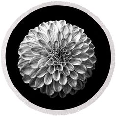 Square Round Beach Towel featuring the photograph Dahlia Flower Black And White Square by Edward Fielding